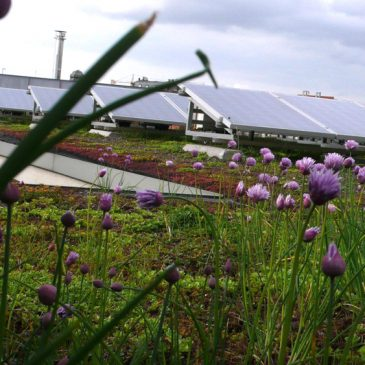 Renforcer les initiatives d'agriculture urbaine #votenagy70